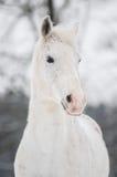 Άσπρο άλογο Στοκ εικόνα με δικαίωμα ελεύθερης χρήσης