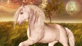 Άσπρο άλογο Στοκ φωτογραφίες με δικαίωμα ελεύθερης χρήσης