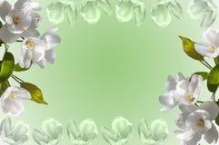 Άσπρο δέντρο μηλιάς λουλουδιών πλαισίων Στοκ Φωτογραφία