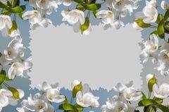 Άσπρο δέντρο μηλιάς λουλουδιών πλαισίων Στοκ εικόνες με δικαίωμα ελεύθερης χρήσης
