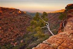 Άσπρο δέντρο στην άκρη των απότομων βράχων φαραγγιών βασιλιάδων ` s, Αυστραλία Στοκ φωτογραφία με δικαίωμα ελεύθερης χρήσης