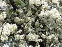 Άσπρο δέντρο Στοκ εικόνες με δικαίωμα ελεύθερης χρήσης