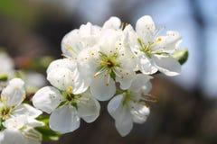 Άσπρο δέντρο Στοκ Εικόνες