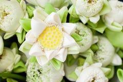 Άσπρο δίπλωμα λουλουδιών λωτού. στοκ εικόνα