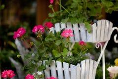 Άσπρο αγροτικό χαριτωμένο δοχείο λουλουδιών Στοκ Φωτογραφίες