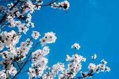Άσπρο ανθίζοντας δέντρο ενάντια στο μπλε ουρανό Στοκ φωτογραφία με δικαίωμα ελεύθερης χρήσης