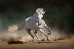 Άσπρο ανδαλουσιακό άλογο Στοκ εικόνα με δικαίωμα ελεύθερης χρήσης