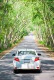 Άσπρο αυτοκίνητο στη σήραγγα δέντρων Στοκ Εικόνες