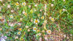 Άσπρο αφηρημένο υπόβαθρο λουλουδιών Στοκ εικόνες με δικαίωμα ελεύθερης χρήσης