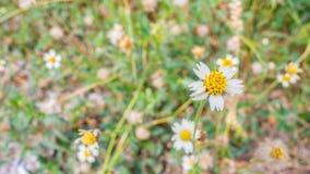 Άσπρο αφηρημένο υπόβαθρο λουλουδιών Στοκ Εικόνες
