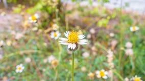 Άσπρο αφηρημένο υπόβαθρο λουλουδιών Στοκ Φωτογραφία