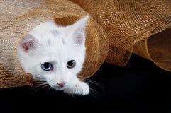 Άσπρο γατάκι κάτω από το πλέγμα διακοπών Στοκ Φωτογραφίες