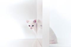 Άσπρο γατάκι πίσω από το ράφι Στοκ Εικόνες