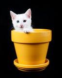 Άσπρο γατάκι που κοιτάζει από τον κίτρινο καλλιεργητή Στοκ εικόνα με δικαίωμα ελεύθερης χρήσης