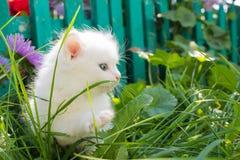 Άσπρο γατάκι στη χλόη Στοκ φωτογραφίες με δικαίωμα ελεύθερης χρήσης