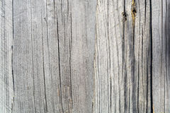 Άσπρο γκρίζο ξύλινο υπόβαθρο σύστασης με τα φυσικά σχέδια Στοκ Εικόνες