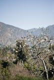 Άσπρο δέντρο μεταξιού νήματος με τα βουνά στοκ εικόνες με δικαίωμα ελεύθερης χρήσης