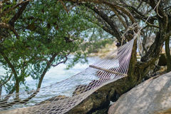 Άσπρο δεμένο λίκνο δέντρο παραλιών παραλιών Στοκ φωτογραφία με δικαίωμα ελεύθερης χρήσης