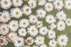 Άσπρο επιπλέον σώμα λουλουδιών στο aqua Στοκ φωτογραφία με δικαίωμα ελεύθερης χρήσης