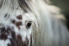 Άσπρο επισημασμένο πορτρέτο αλόγων Στοκ Φωτογραφίες