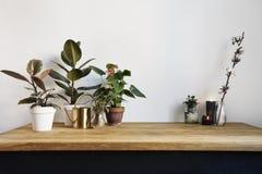 Άσπρο εσωτερικό κουζινών με τις πράσινες εγκαταστάσεις στον αγροτικό ξύλινο πίνακα, σύγχρονος εργασιακός χώρος στο σκανδιναβικό ύ στοκ φωτογραφίες με δικαίωμα ελεύθερης χρήσης