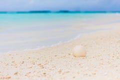 Άσπρο θαλασσινό κοχύλι στην άμμο στην παραλία Στοκ φωτογραφίες με δικαίωμα ελεύθερης χρήσης