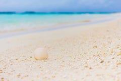 Άσπρο θαλασσινό κοχύλι στην άμμο στην παραλία Στοκ φωτογραφία με δικαίωμα ελεύθερης χρήσης