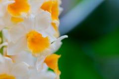Άσπρο διάστημα λουλουδιών και αντιγράφων ορχιδεών Στοκ φωτογραφία με δικαίωμα ελεύθερης χρήσης