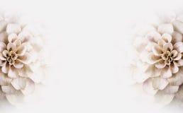 Άσπρο διαστημικό υπόβαθρο αντιγράφων λουλουδιών Στοκ εικόνα με δικαίωμα ελεύθερης χρήσης