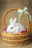 Άσπρο καθαρό όμορφο λαγουδάκι Πάσχας δίπλα σε ένα ψάθινο καλάθι με τα αυγά στο burlap krashenyymi υποβάθρου φυσικό ύφασμα Στοκ Φωτογραφία