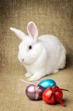 Άσπρο καθαρό όμορφο λαγουδάκι Πάσχας δίπλα σε ένα ψάθινο καλάθι με τα αυγά στο burlap krashenyymi υποβάθρου φυσικό ύφασμα Στοκ φωτογραφία με δικαίωμα ελεύθερης χρήσης