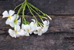 Άσπρο και κίτρινο Plumeria SSP (λουλούδια frangipani, Frangipani, Στοκ φωτογραφία με δικαίωμα ελεύθερης χρήσης