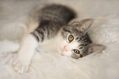 Άσπρο και μαύρο γατάκι με τα μεγάλα μάτια Στοκ Φωτογραφίες