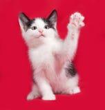 Άσπρο και μαύρο γατάκι playng στο κόκκινο Στοκ φωτογραφία με δικαίωμα ελεύθερης χρήσης