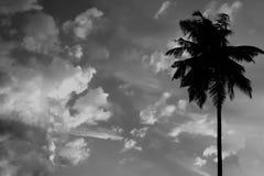 Άσπρο και μαύρο ηλιοβασίλεμα στους τροπικούς κύκλους με τη σκιαγραφία του φοίνικα στον ουρανό με τα σύννεφα αφηρημένος ουρανός Στοκ Εικόνα