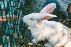 Άσπρο και μαύρο κουνέλι σε ένα κλουβί Στοκ φωτογραφία με δικαίωμα ελεύθερης χρήσης