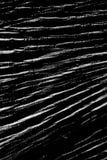 Άσπρο και μαύρο υπόβαθρο γραμμών Στοκ Εικόνα