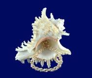 Περιδέραιο θαλασσινών κοχυλιών και μαργαριταριών Στοκ Φωτογραφίες