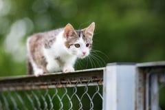 Άσπρο και τιγρέ περιπλανώμενο γατάκι υπαίθρια Στοκ εικόνα με δικαίωμα ελεύθερης χρήσης