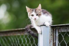 Άσπρο και τιγρέ περιπλανώμενο γατάκι υπαίθρια Στοκ Εικόνα