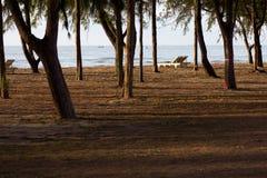 Άσπρο καφετί πεύκο θάλασσας καρεκλών παραλιών Στοκ φωτογραφία με δικαίωμα ελεύθερης χρήσης