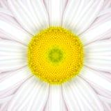 Άσπρο κεντρικό καλειδοσκόπιο λουλουδιών Mandala ομόκεντρο στοκ φωτογραφία