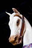 Άσπρο κεφάλι αλόγων ιπποδρομίων Στοκ Εικόνες