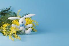 Άσπρο κουνέλι και κίτρινο mimosa Στοκ φωτογραφία με δικαίωμα ελεύθερης χρήσης