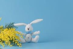 Άσπρο κουνέλι και κίτρινο mimosa Στοκ εικόνα με δικαίωμα ελεύθερης χρήσης