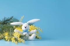 Άσπρο κουνέλι και κίτρινο mimosa Στοκ εικόνες με δικαίωμα ελεύθερης χρήσης