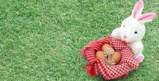 Άσπρο κουνέλι με τα αυγά στο υπόβαθρο χλόης Στοκ Φωτογραφίες