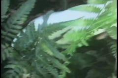 Άσπρο κουνέλι που τρέχει στο δάσος απόθεμα βίντεο