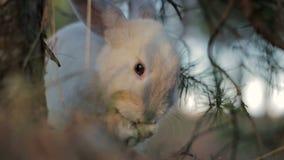 Άσπρο κουνέλι σε ένα θερινό δάσος απόθεμα βίντεο