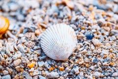 Άσπρο κοχύλι σε μια ακτή Στοκ Φωτογραφία